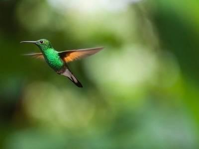 Bild eines Kolibris